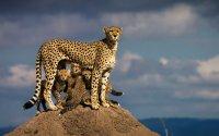 7 Days Masai Mara - Lake Naivasha - Lake Nakuru - Amboseli