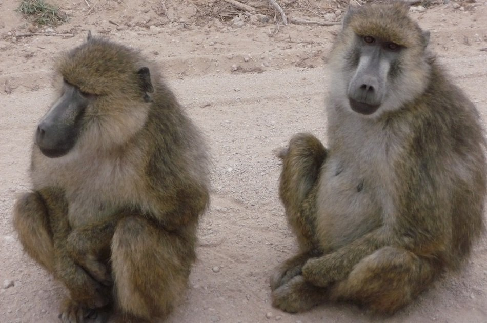 Remarkable Nairobi Half Day Tour: Animal Orphanage & Elephant centre