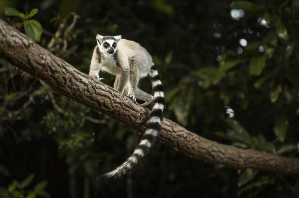 11 Day Island Hopping in Madagascar From South Africa