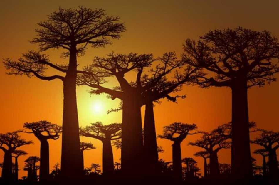 West Circuit – Baobab Avenue, Riverboat Voyage, and Rainforests