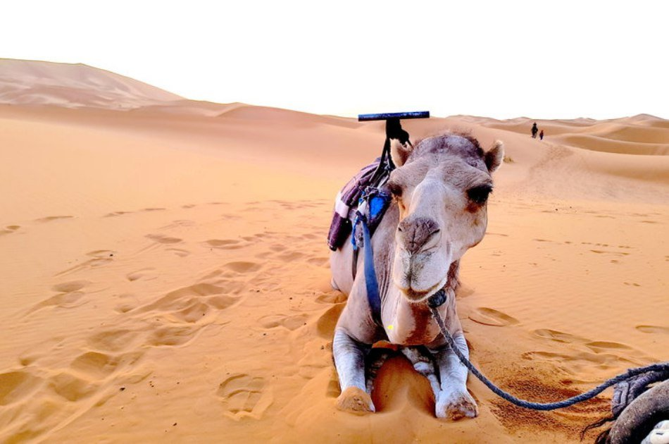 Sahara, Camels and Atlas Mountains private Tour from Marrakech in 3 Days