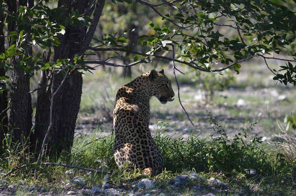 Bushman Tribe & Wildlife – Accommodated Tour