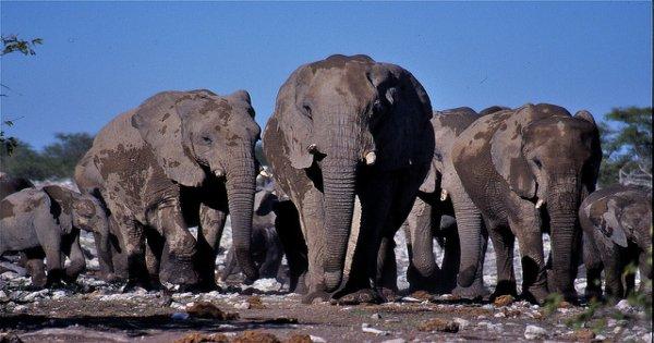 Unbelievable Botswana and Namibia Tours