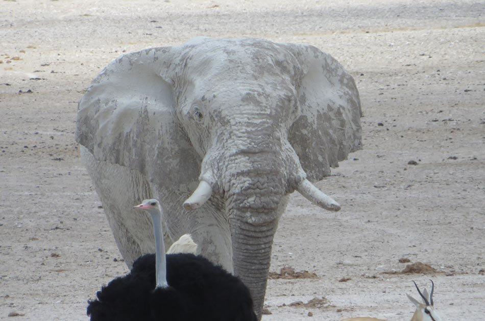 Himba Tribe & Wildlife – Accommodated Tour