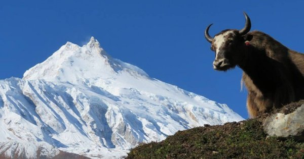 13-17 Day Private  Manaslu Circuit Trek With Larkey La Pass