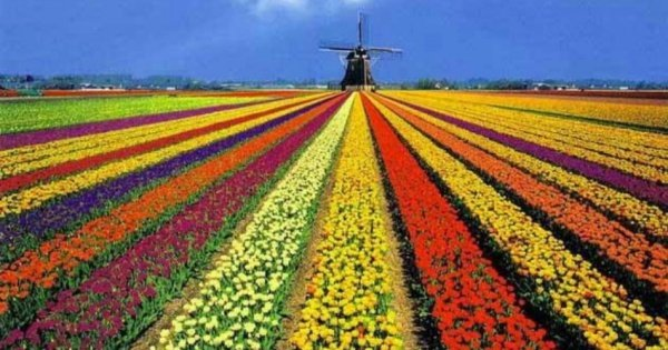Half-Day Keukenhof Tour from Amsterdam