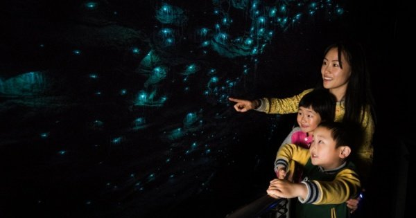 Waitomo Tour for Cruise-ships - a Subterranean Treat!