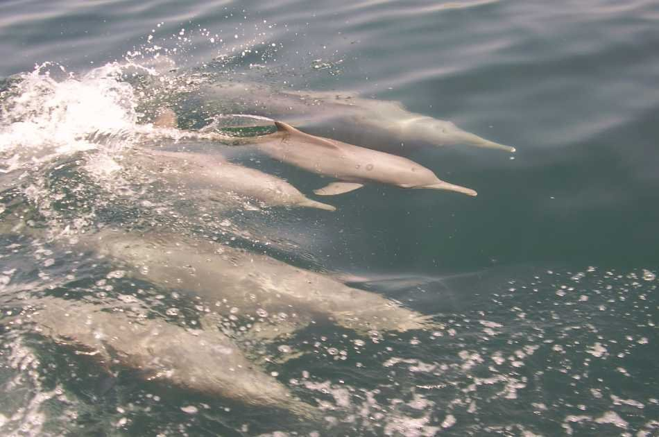 Muscat Dolphin Cruise