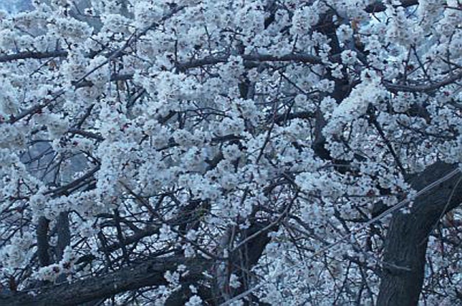 07 Day Apricot/Cherry Blossom Tour From Islamabad