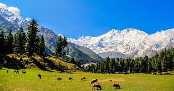 5 Day Fairy Meadows Nanga Parbat Base Camp Trek Pakistan