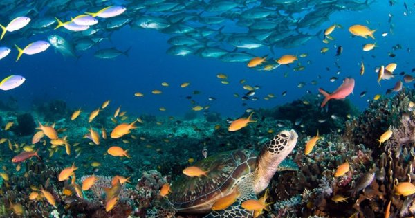 Puerto Galera Scuba Diving for Beginners