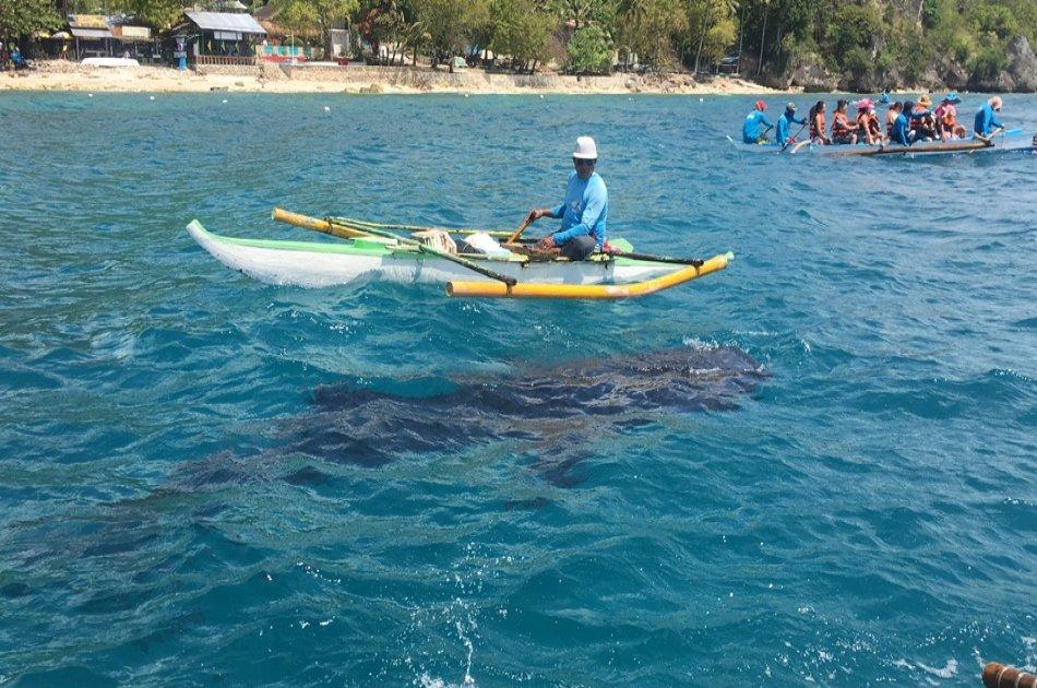 Whaleshark Private Interaction with Kawasan Falls from Cebu City