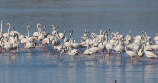 Birdwatching at Abicada