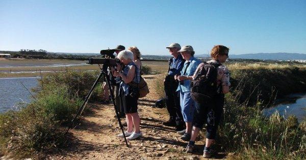 Birdwatching at Ria de Alvor