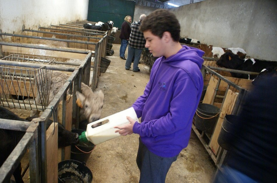 Day at the Farm in the Azores (Interact With the Animals)