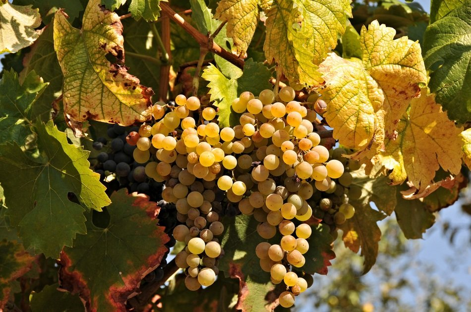 Douro Valley Small Group Tour with Wine Tastings & Lunch from Porto