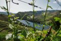 Enjoy a Tasty Douro Valley Private Full Day Wine Tour