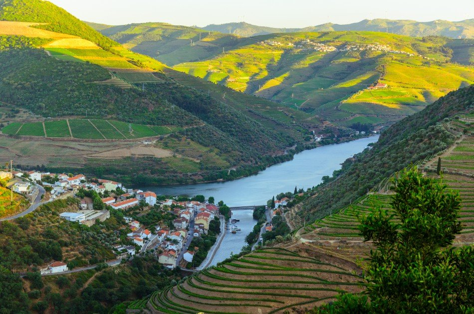 Full Day Oporto Family Vineyard Guided Tour In Portugal