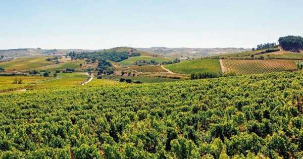 Private Tour, One Day Visit Awarded Wineries in Lisbon Region