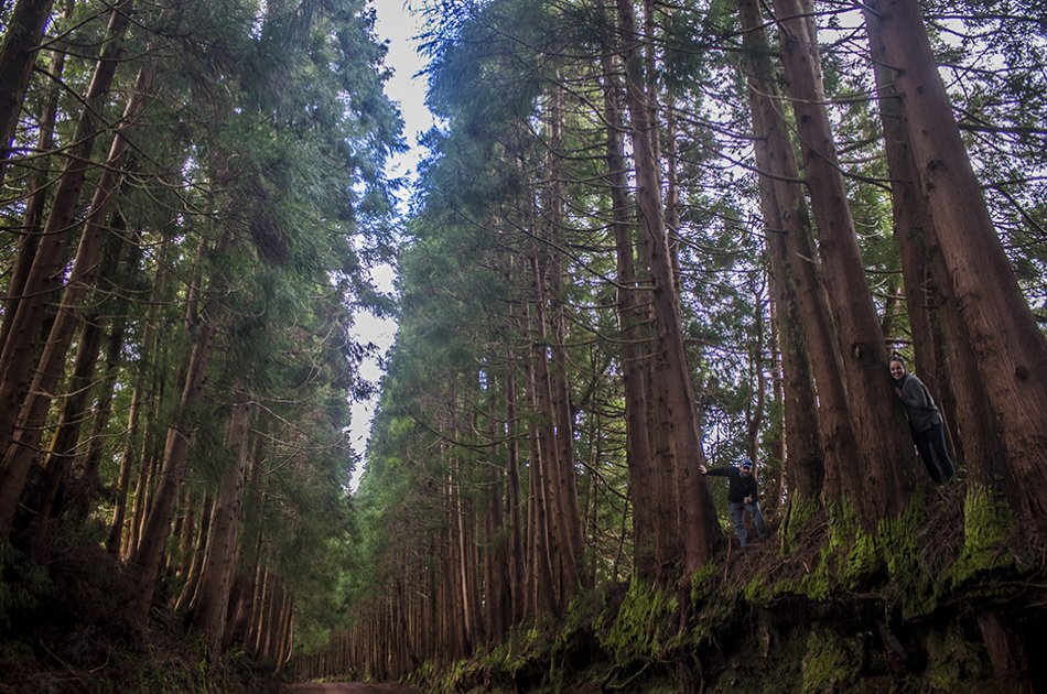 Volcanos & Forest 4x4 Day Tour from Praia de Vitoria and Angra in Azores