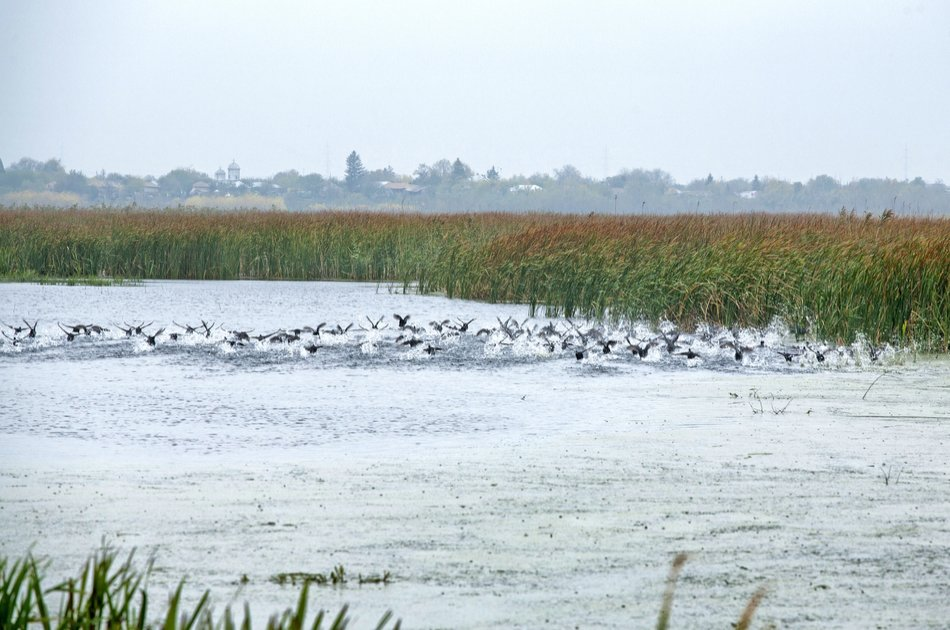 """""""The Delta"""" near Bucharest With Boat Trip"""