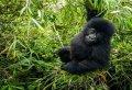 Full Day Rwanda Gorilla Trekking Tour