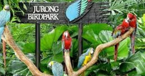 Lunch With Parrot At Jurong Bird Park
