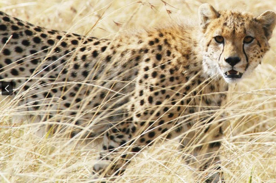 11 Day South Africa Family Adventure