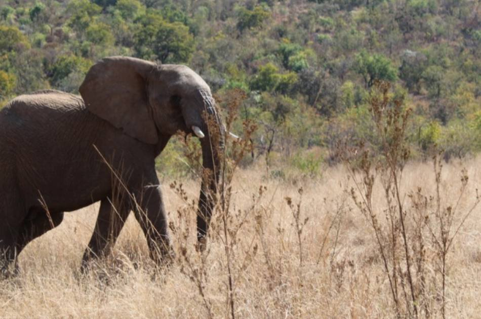 16 Day Self Drive Johannesburg, Kruger and Tropical Mozambique Tour