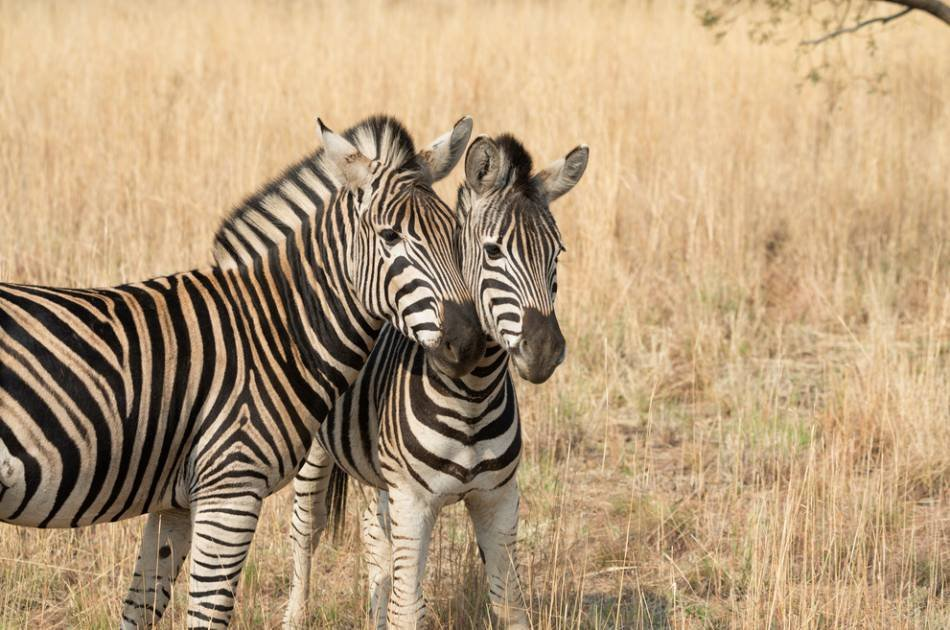 3 Days in Pilanesburg National Park