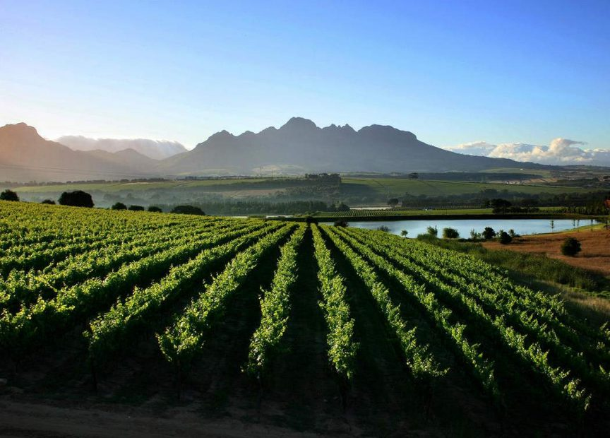 Full Day Cape Town Wine Lovers Tours