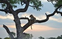 Immerse Yourself in Spectacular Guided South Africa Safari Tour