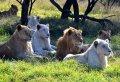 Energetic Safari & Phezulu Village Tour From Durban