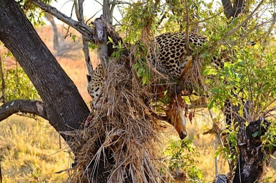 Hluhluwe Imfolozi Game Reserve Tour From Durban