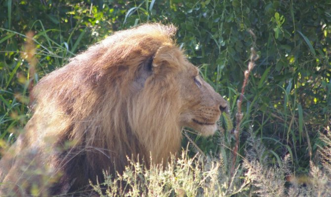 4 Day Kruger Park Classic Safari in South Africa
