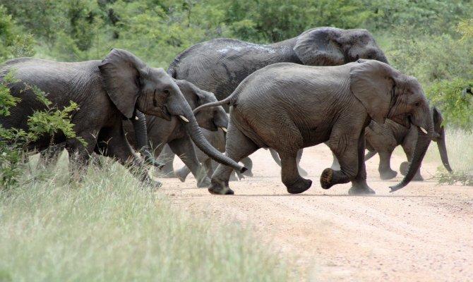 Safari South Africa - Kruger National Park and Panoramic Tour