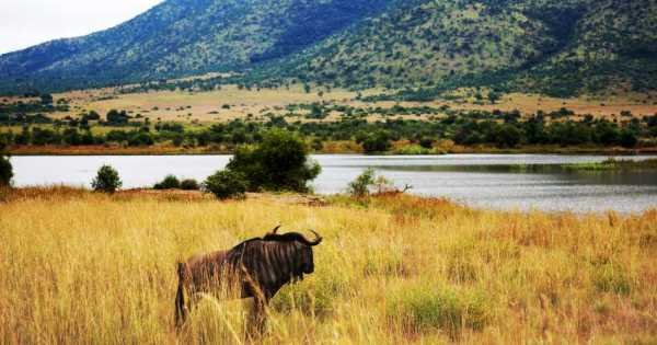 Pilanesberg Day Safari from Johannesburg