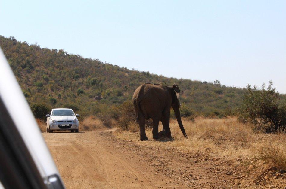 Pillannesburg National Park Open Vehicle  Day Safari from Johannesburg