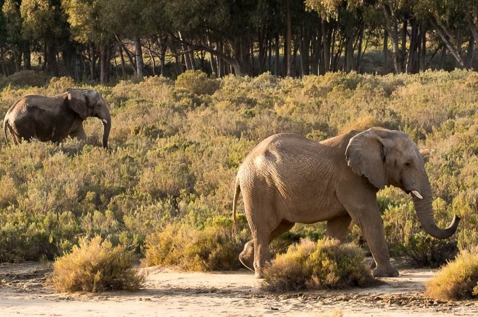Private Luxury Aquila Game Reserve Tour from Cape Town