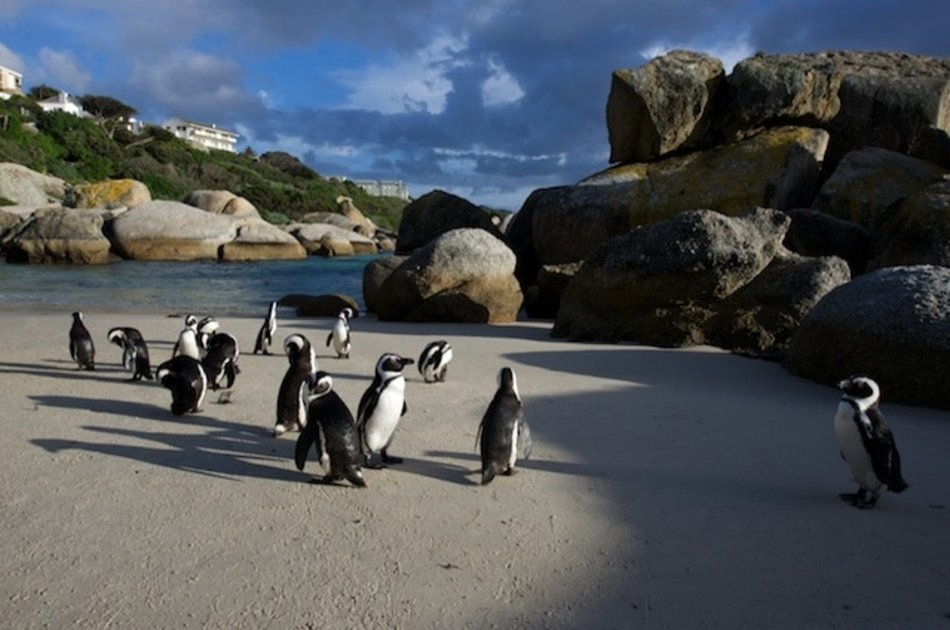 Private Luxury Cape of Good Hope Tour Cape Town