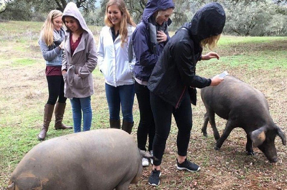Aracena Pig Farm Visit From Sevilla