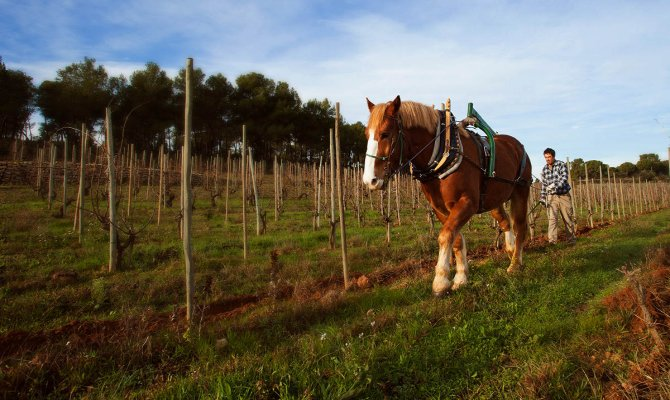 From Barcelona: Natural wine tour in the Penedès region