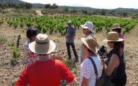 From Barcelona: Natural wine tour in the Empordà region.