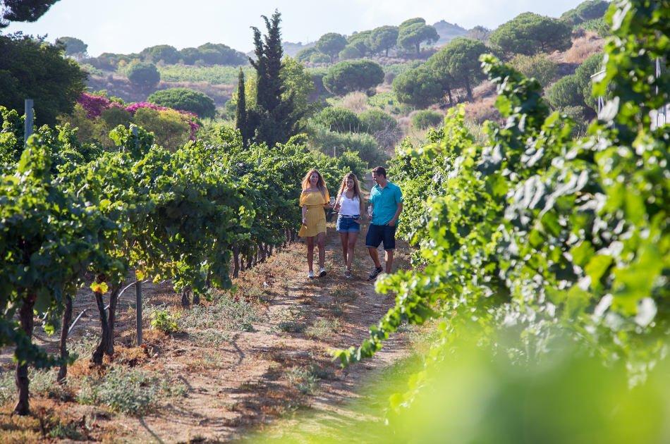Boutique Wineries, Wine & Tapas Tour in Barcelona