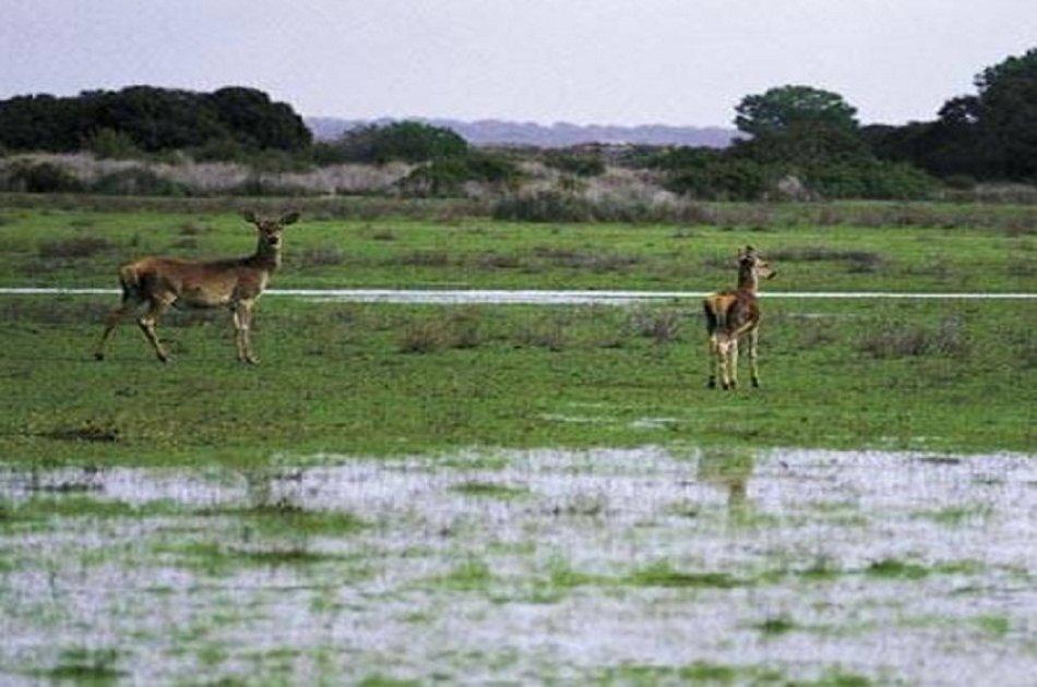 Doñana Nature Park -  Off the Beaten Path Tour