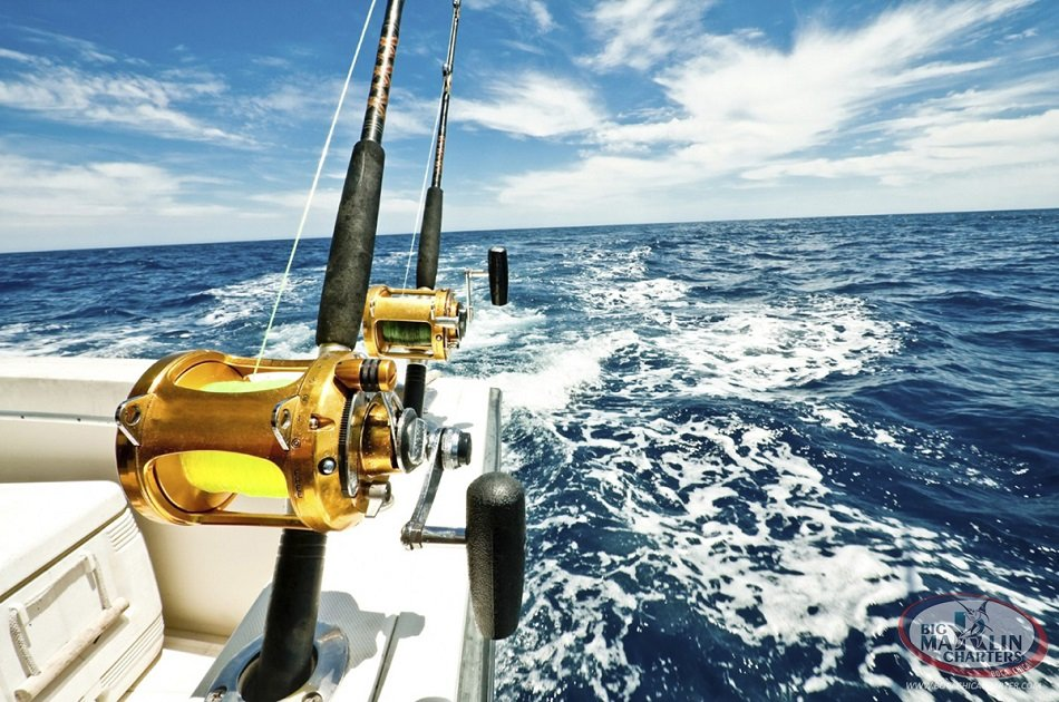 Fantastic Fishing Trip Off the Barcelona Coast