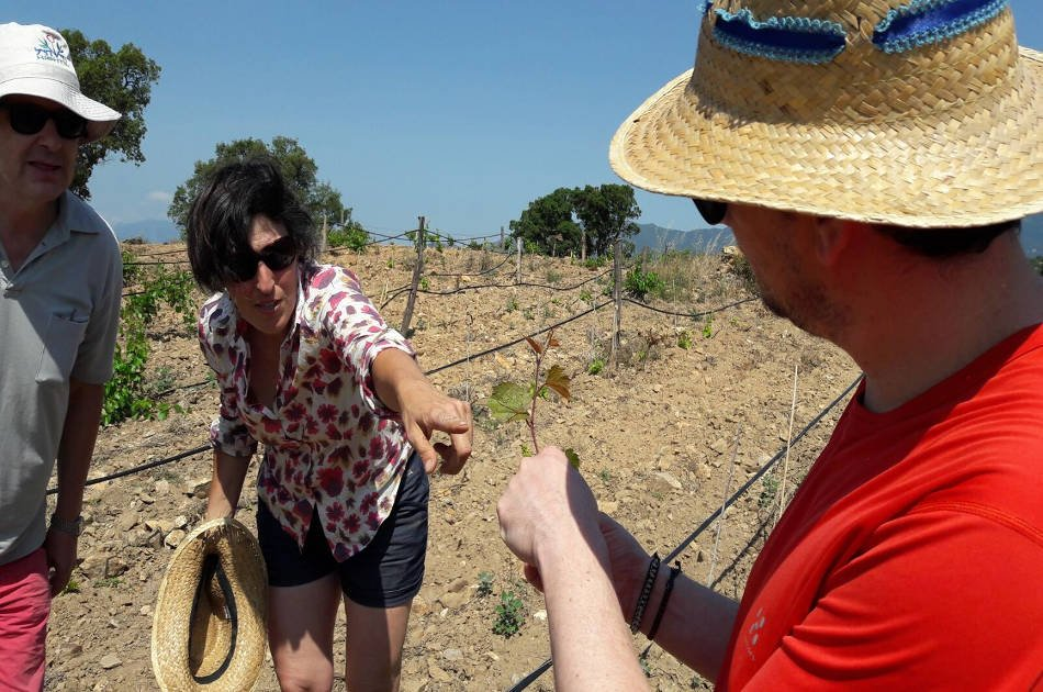 Natural Wine Tour in the Empordà Region from Barcelona