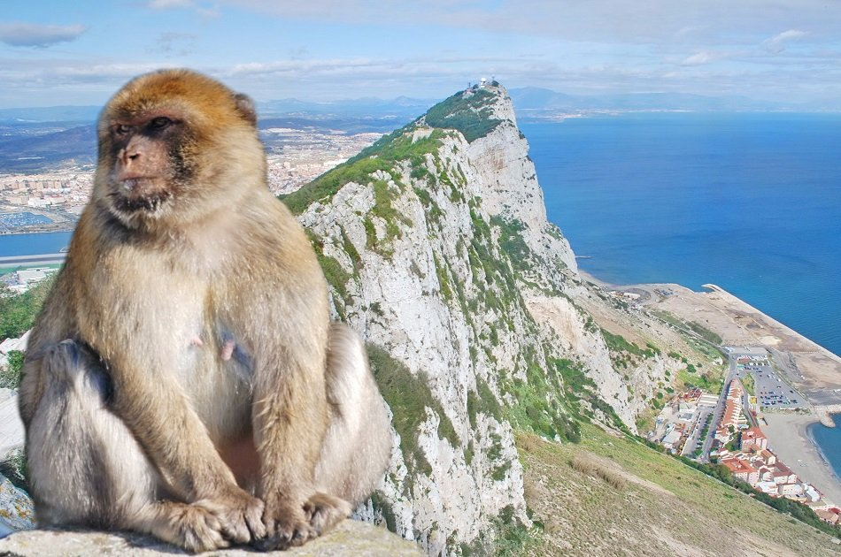 Private Gibraltar Day Trip from Malaga, Mijas Costa, Marbella or Estepona