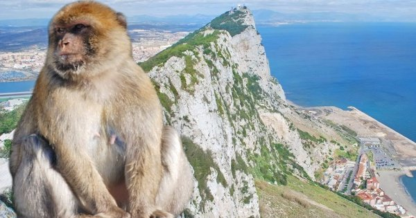 Private Gibraltar Day Trip from Malaga, Mijas Costa, Marbella or Estepona