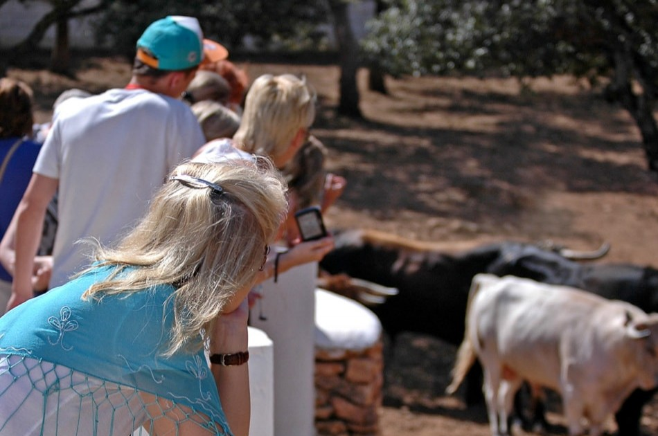 Private Visit to an Andalusian Bull Breeding Farm in Ronda